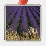 France, PACA, Alpes de Haute Provence, 2 Ornament