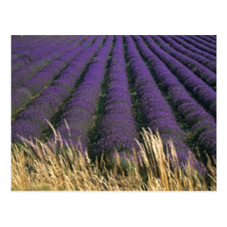 France, PACA, Alpes de Haute Provence, 2 Postcard