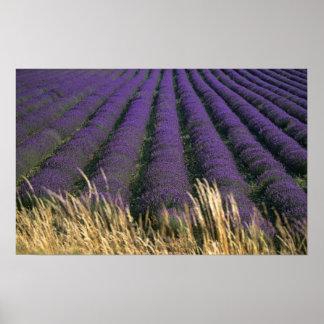 France, PACA, Alpes de Haute Provence, 2 Poster