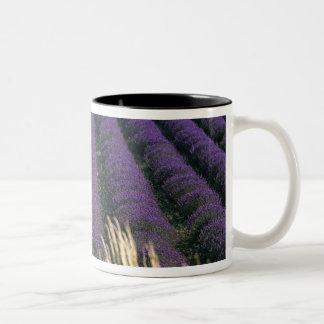 France, PACA, Alpes de Haute Provence, 2 Two-Tone Coffee Mug