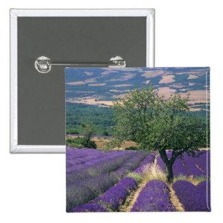 France, PACA, Alpes de Haute Provence, 3 2 Inch Square Button