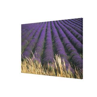 France, PACA, Alpes de Haute Provence, 3 Canvas Print