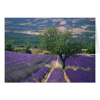 France, PACA, Alpes de Haute Provence, 3 Card