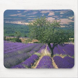 France, PACA, Alpes de Haute Provence, 3 Mouse Pad
