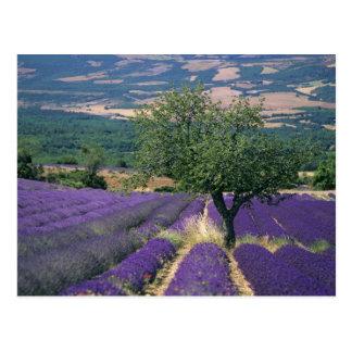 France PACA Alpes de Haute Provence 3 Postcard