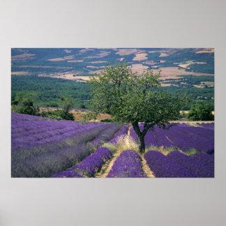 France PACA Alpes de Haute Provence 3 Print