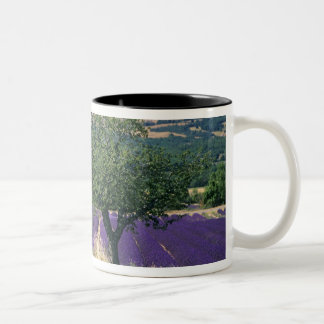 France, PACA, Alpes de Haute Provence, 3 Two-Tone Coffee Mug