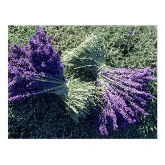 France, PACA, Alpes de Haute Provence, Bunches Postcard