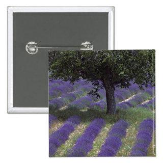 France, PACA, Alpes de Haute Provence, 2 Inch Square Button