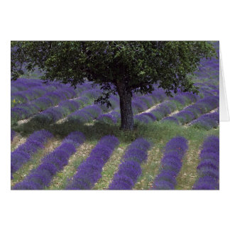 France, PACA, Alpes de Haute Provence, Greeting Card