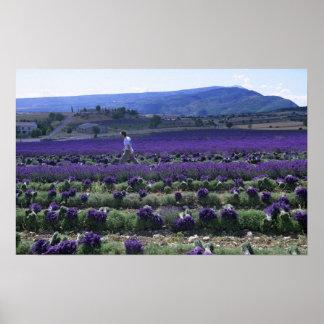 France, PACA, Alpes de Haute Provence, Manual Poster