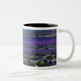 France, PACA, Alpes de Haute Provence, Manual Two-Tone Coffee Mug