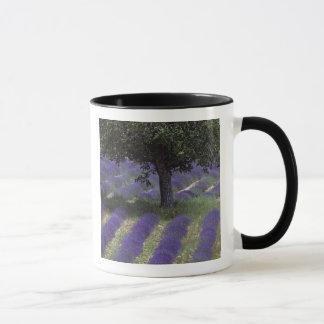France, PACA, Alpes de Haute Provence, Mug