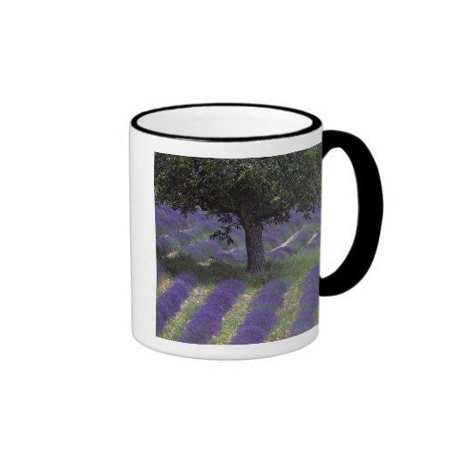 France, PACA, Alpes de Haute Provence, Ringer Coffee Mug