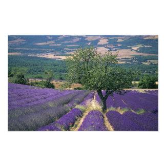 France, PACA, Alpes de Haute Provence, Photo Print