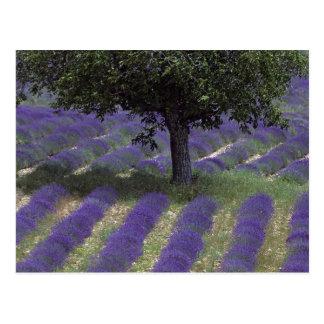 France, PACA, Alpes de Haute Provence, Postcard