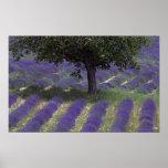 France, PACA, Alpes de Haute Provence, Poster