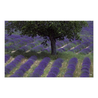 France PACA Alpes de Haute Provence Poster