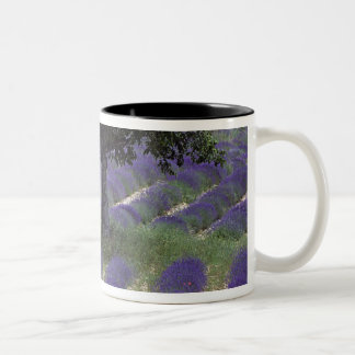 France, PACA, Alpes de Haute Provence, Two-Tone Coffee Mug