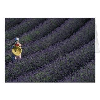 France, PACA, Alpes de Haute Provence, Woman Card