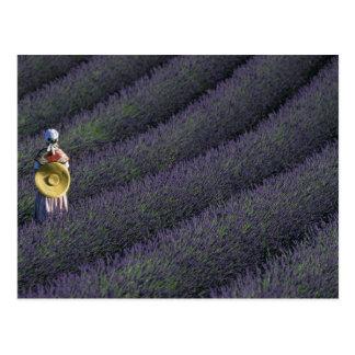 France, PACA, Alpes de Haute Provence, Woman Postcard