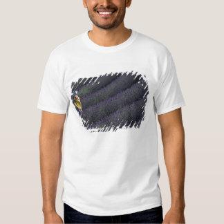 France, PACA, Alpes de Haute Provence, Woman T-shirt