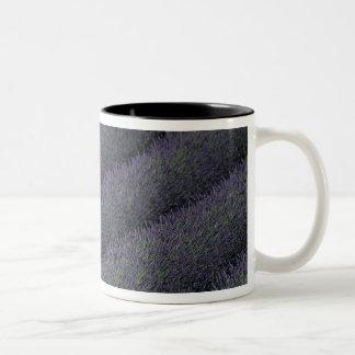France, PACA, Alpes de Haute Provence, Woman Two-Tone Coffee Mug