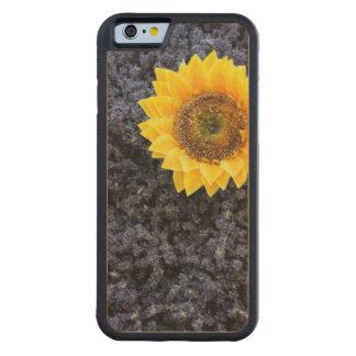 France, Provence-Alpes-Cote d'Azur Carved Maple iPhone 6 Bumper Case