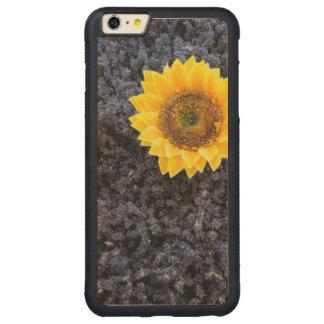 France, Provence-Alpes-Cote d'Azur Carved Maple iPhone 6 Plus Bumper Case