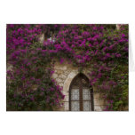 France, Provence, Eze. Bright pink Card