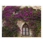 France, Provence, Eze. Bright pink Photo Print