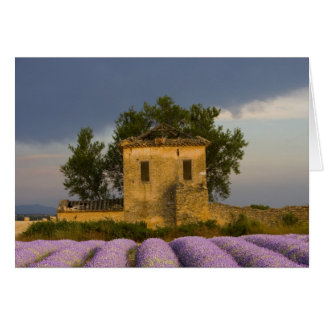 France, Provence. Field of lavender and Card