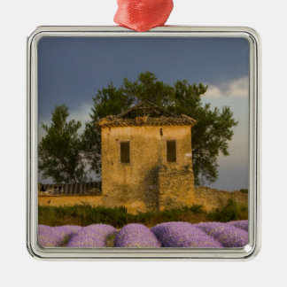 France Provence Field of lavender and Ornament
