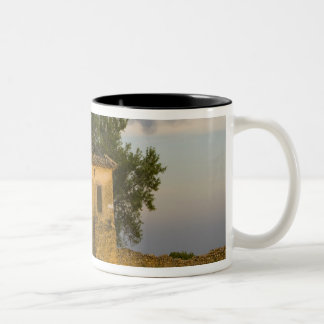 France, Provence. Field of lavender and Two-Tone Coffee Mug