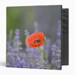 France, Provence. Lone poppy in field of 3 Ring Binder