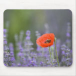 France, Provence. Lone poppy in field of Mouse Pad