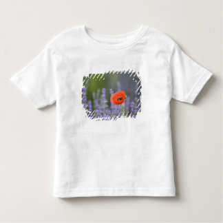 France, Provence. Lone poppy in field of Toddler T-shirt