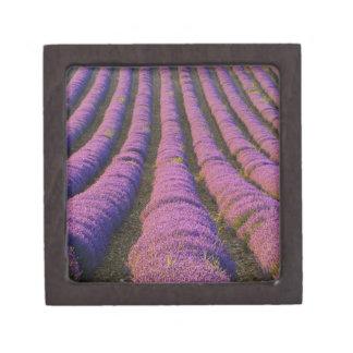 France, Provence Region. Orderly rows of Premium Keepsake Boxes