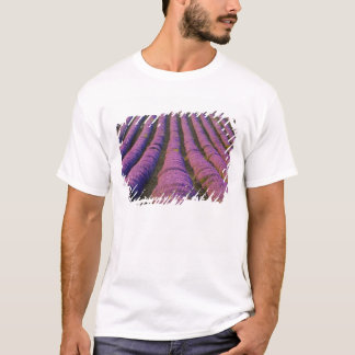 France, Provence Region. Orderly rows of T-Shirt