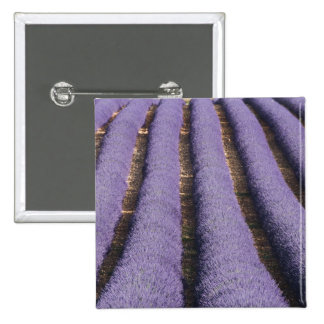 France, Provence. Rows of lavender in bloom. 2 Pinback Button