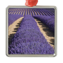 France, Provence. Rows of lavender in bloom. 3 Metal Ornament