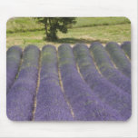 France, Provence. Rows of lavender in bloom. Mouse Pad
