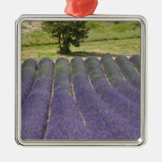 France Provence Rows of lavender in bloom Ornament