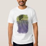 France, Provence. Rows of lavender in bloom. T-shirt
