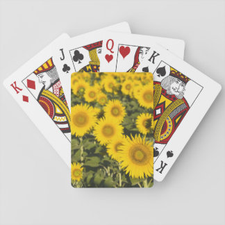 France, Provence, Valensole. Field of Deck Of Cards