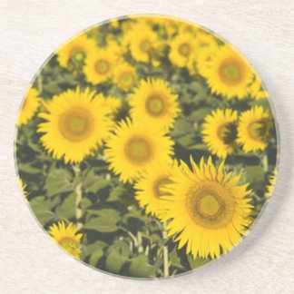 France, Provence, Valensole. Field of Drink Coaster