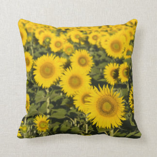 France, Provence, Valensole. Field of Throw Pillow
