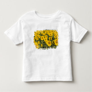 France, Provence, Valensole. Field of Toddler T-shirt
