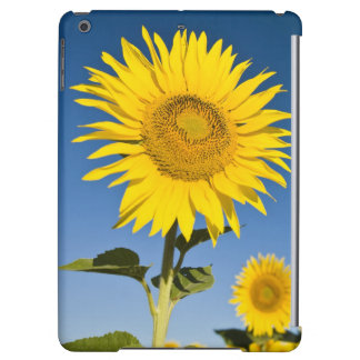 France, Provence, Valensole. Sunflowers stand iPad Air Cover