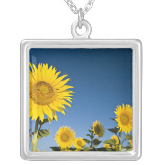 France, Provence, Valensole. Sunflowers stand Silver Plated Necklace